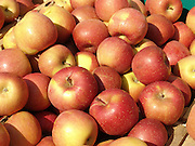 Close up of picked apples.