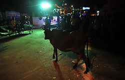 September 26, 2016 - Allahabad, Uttar Pradesh, India - Allahabad: A cow stand as a religious procession Ravan ki Barat passes in Allahabad on September 26, 2016, held to mark the Dussehra festival. The name Dussehra is derived from Sanskrit Dasha-hara literally means removal of ten referring to Lord Rama's victory over the ten-headed demon king Ravana. Dussehra is celebrated on the tenth day of the month of Ashwin according to the Hindu calendar which corresponds to September or October of the Gregorian calendar. (Credit Image: © Prabhat Kumar Verma via ZUMA Wire)
