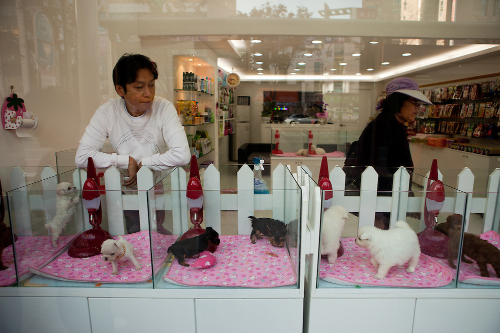 Daegu/South Korea, Republic Korea, KOR, 03.11.2010: View to a shop which is selling puppies in the South Korean city of Daegu. The animals are presented in auquarium like glass boxes to the customers.