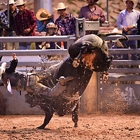 Ryan McConnel being bucked off a bull at Wild Thing 25th Annual Championship Bull Riding competition at Red Rock Park, July 14.