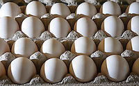 White, farm fresh chicken eggs.