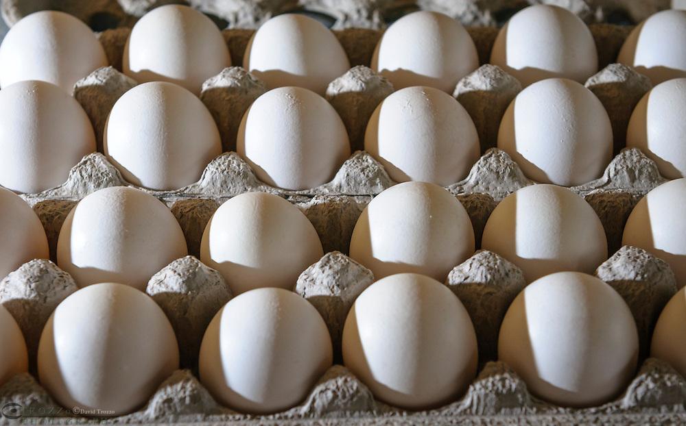 White, farm fresh chicken eggs.