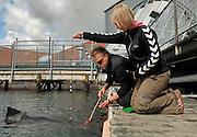 Harbour porpoise Phocoena Phocoena Fjord & Baelt - Meike Linnenschmidt - - Jakob Højer Kristensen -