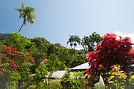 A vast array of tropical plants on sale at the St. Rose Nursery owned by John Criswick in  La Mode, St. George's, Grenada, Caribbean, West Indies