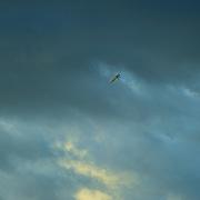 A lone plane soars skyward during the 18th Philippine International Hot Air Balloon Fiesta