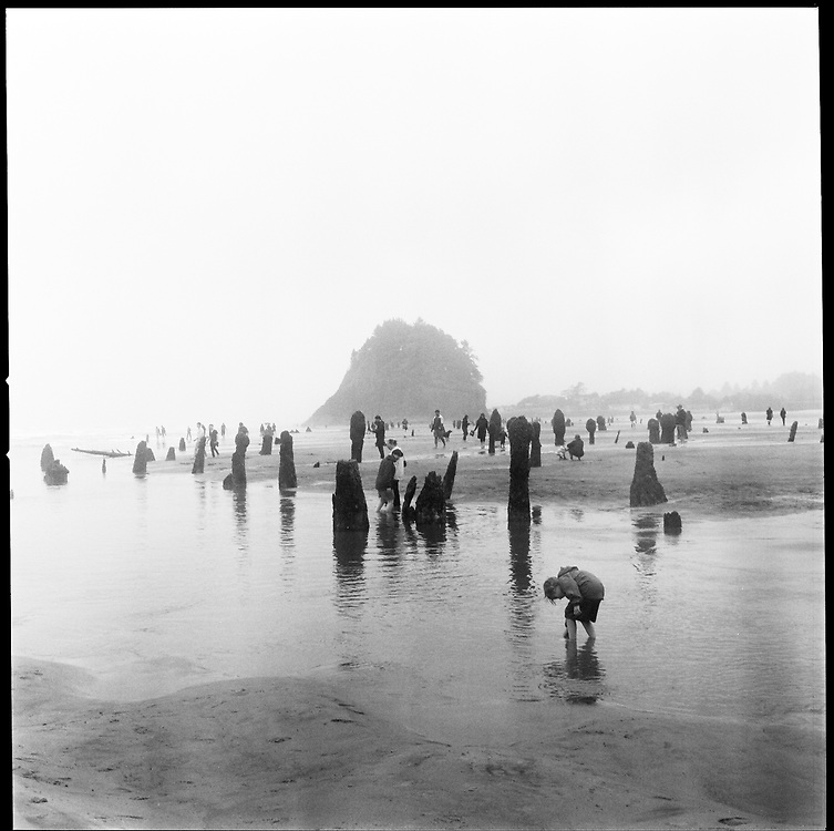 Rarely, a minus tide is low enough to expose a ghost forest to the sea air in Neskowin, Oregon. The petrified Sitka spruce trees, more than 2,000 years old, were drowned by an immense tectonic shift during a catastrophic earthquake in 1700. The ocean rose up to cover them. Now, once or twice a year, tourists with selfie sticks explore the seabed forest.