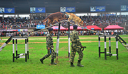 August 15, 2017 - Dimapur, Nagaland, India - Contingents from 175 CRPF (Central Reserve Police Force) perform a Dog show during the 70th India Independence day celebration in Dimapur, India north eastern state of Nagaland on Tuesday, 15 August 2017. (Credit Image: © Caisii Mao/NurPhoto via ZUMA Press)