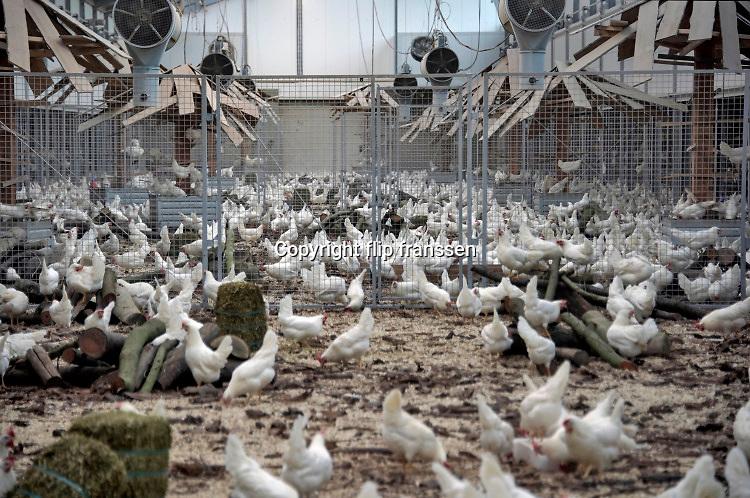 Nederland,  Beuningen, 10-1-2020 Opening van eennieuwe moderne,duurzame en diervriendelijke kippenstal.De Kipster is een kippenbedrijf wat milieuvriendelijk en diervriendelijk eieren produceert. Kippen hebben ruimte en kunnen naar buiten. De stal is klimaatneutraal. Via zonnepanelen op het dak wordt eigen stroom opgewekt. Foto: Flip Franssen