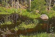 Wetland. Baie Verte Peninsula.<br />La Scie<br />Newfoundland & Labrador<br />Canada