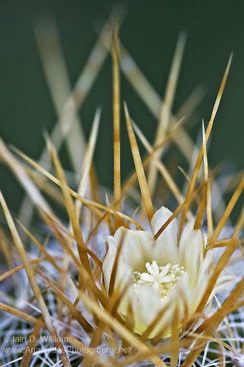 Flower & Spikes - Tasmania