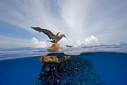 Cocos Island and Costa Rica