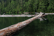 These large trees have evidently been in Chilliwack Lake for a number of years. This scene was photographed at the northwest end of Chilliwack Lake just before the start of the Chilliwack River.