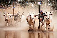 Bull races are held at several venues around the Mekong Delta each Fall to celebrate the harvest of the Fall rice crop. These bulls are making their charge at a race in An Giang Province in the far West of the Mekong Delta near Cambodia. Robert Dodge, a Washington DC photographer and writer, has been working on his Vietnam Unexpected project since 2005. The project has taken him throughout Vietnam, including Hanoi, Ho Chi Minh City (Saigon), Nha Trang, Mue Nie, Phan Thiet, the Mekong, Sapa, Ninh Binh and the Perfume Pagoda. His images capture scenes and people from women in conical hats planting rice along the Red River in the north to men and women working in the floating markets one the Mekong River and its tributaries. Robert's project also captures the traditions of ancient Asia in the rural markets, Buddhist Monasteries and the celebrations around Tet, the Lunar New Year. Also to be found are images of the emerging modern Vietnam, such as young people eating and drinking and embracing the fashions and music of the west. Robert Dodge, a Washington DC photographer and writer, has been working on his Vietnam Unexpected project since 2005. The project has taken him throughout Vietnam, including Hanoi, Ho Chi Minh City (Saigon), Nha Trang, Mue Nie, Phan Thiet, the Mekong, Sapa, Ninh Binh and the Perfume Pagoda. His images capture scenes and people from women in conical hats planting rice along the Red River in the north to men and women working in the floating markets one the Mekong River and its tributaries. Robert's project also captures the traditions of ancient Asia in the rural markets, Buddhist Monasteries and the celebrations around Tet, the Lunar New Year. Also to be found are images of the emerging modern Vietnam, such as young people eating and drinking and embracing the fashions and music of the West.