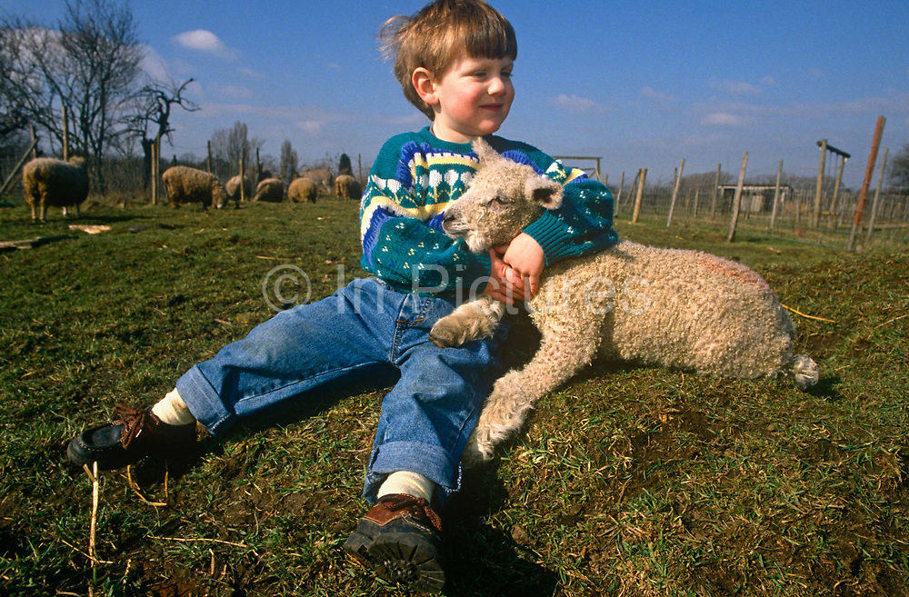 A young boy in a field plays with a spring lamb at Drusillas Park Zoo. Hugging the animal tight in his arms, the lad enjoys the feel of its wool and its natural smell. Educating the young with hands-on experiences help the urban to understand the nature of farming and the sources of their food. But after this contact with livestock, the boy needs to wash his hands thoroughly as the risk of infections such as E.coli are significant – as has been discovered in other park zoos and farms. Cattle and sheep are the main carriers of E.coli O157 so hand washing using warm water and soap is an important and effective control. It is recommended that washing after working with or touching animals, their dung, manure, slurry or sewage. E.coli O157 can live for some months in the soil.