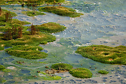 Roiling green pools outgas in the Mud Volcano Area, Yellowstone National Park, Wyoming, USA. Yellowstone was established as the world's first national park in 1872 and was listed by UNESCO as a World Heritage site in 1978.