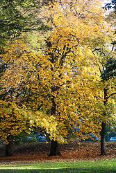Autumn Trees Endcliffe Park Sheffield<br /> 21 October 2012<br /> Image © Paul David Drabble