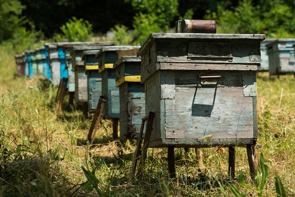 Beehives next to the forest Valea Fagilor close to Macin Mountains National Park. Somewhere between Horia village and Tulcea, Romania.