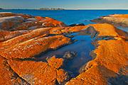 Lichen covered, Glacially eroded Precambrian shield rock on coast islands in Georgian Bay (Lake Huron) near south end of Killarney Provincial Park. South of Philip Edward Island.<br />Adjacent Killarney Provincial Park<br />Ontario<br />Canada