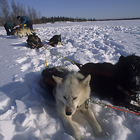 1993 Training Expedition to Great Slave Lake, NWT, Canada.