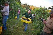 Pollak Vineyards in Crozet, Virginia. .Photo by Justin Ide