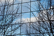 Trees and sky reflected in a glass building. natural and man made together. London, UK.