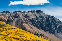 Turning of the aspen trees during the autumn season. Below 13,661 ft. Lookout Peak along the Ophir Pass Road, San Juan Mountains, Colorado.