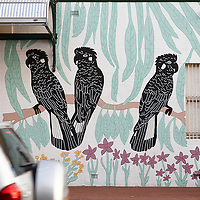 White tailed black cockatoo mural on Newcastle St Perth Region