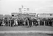 "08/05/1965<br /> 05/08/1965<br /> 08 May 1965<br /> The 1965 Gold Flake Meeting at Leopardstown Racecourse, Co. Dublin. Image shows Mr A.J. Russell's ""Scotch Corner"", winner of the  the Bristol Handicap race."