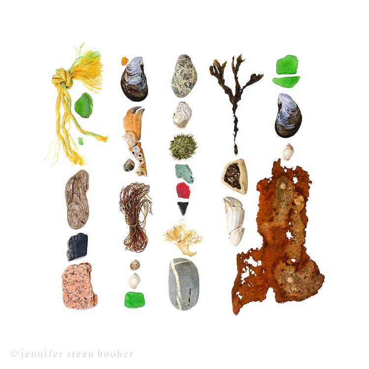 Polypropylene rope, sea glass, driftwood, beach stones (basalt, granite, schist?), Blue Mussel (Mytilus edulis), crab claws (probably Cancer borealis), Periwinkle (Littorina sp.), wire, Dog whelk (Nucella lapillus), Waved Whelk (Buccinum undatum), Green Sea Urchin (Strongylocentrotus drobachiensis), Irish Moss (Chondrus crispus), Rockweed (Fucus vesiculosus), pottery fragment, rusted metal with Northern Rock Barnacle (Semibalanus balanoides)