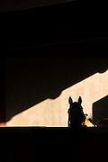 Silhouette of horses head, Estancia La Bamba De Areco, Pampas, Argentina, South America