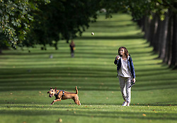 © Licensed to London News Pictures. 01/09/2021. Windsor, UK. A dog walker throws a ball on the Long Walk near Windsor Castle as the sun breaks through the early morning cloud. Today is the first day of meteorological autumn. Photo credit: Peter Macdiarmid/LNP