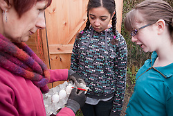 Woman showing girls how to date fresh eggs on an allotment.