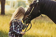 Young blonde girl stroking a brown horse. Friendship child and horse
