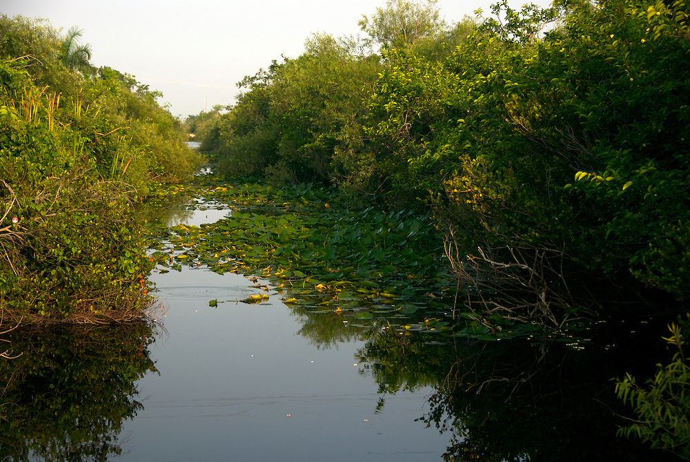 Typical Landscape at Everglades National Park, Florida, USA