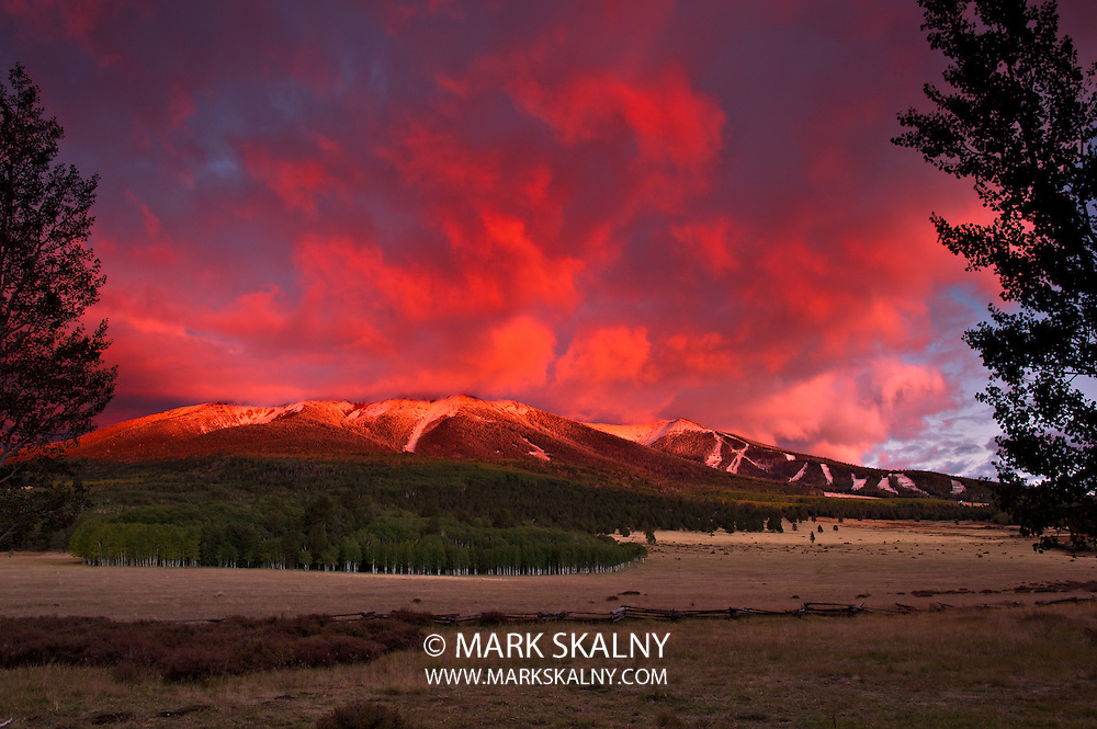View of the north side of the snow capped San Francisco Peaks in Flagstaff Arizona taken at sunset.  There is an aspen & ponderosa pine grove and open prairie in the foreground.
