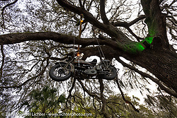 An antique Harley-Davidson hangs from a big old tree at the Broken Spoke Saloon in Ormond Beach during Daytona Beach Bike Week, FL. USA. Wednesday, March 13, 2019. Photography ©2019 Michael Lichter.