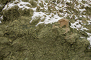 Detail of the volcanic tuff of the Blue Basin feature in the John Day Fossil Beds National Monument; Oregon. Formed from 29-million-year-old volcanic tuff, The erosion scarred slopes of these hills are slowly yielding fossils of ancient animals and plants.