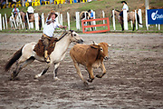 Brazilian Gaucho cowboy male, riding a horse, lasooing a cow cattle, competing in a Rodeo. Gaucho cowboy Rodeo, Flores de Cunha, Rio Grande do Sul.