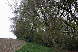 Wendover, UK. 28th April, 2021. A section of ancient woodland at Jones Hill Wood in the Chilterns AONB. Felling of Jones Hill Wood, which contains resting places and/or breeding sites for pipistrelle, barbastelle, noctule, brown long-eared and natterer's bats and is said to have inspired Roald Dahl's Fantastic Mr Fox, has resumed after a High Court judge refused environmental campaigner Mark Keir permission to apply for judicial review and lifted an injunction preventing further felling for the HS2 high-speed rail link. Credit: Mark Kerrison/Alamy Live News