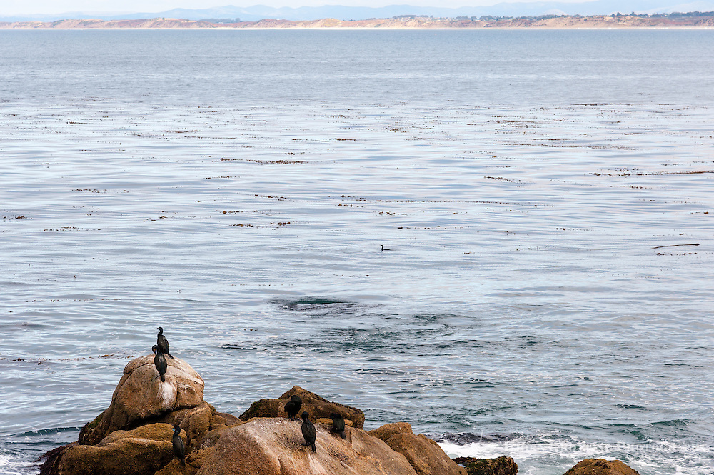 United States, California, Monterey. The waterfront in the city of Monterey. Close to Monterey Bay Aquarium, cormorants.