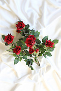 Red Roses Silk flower on white background