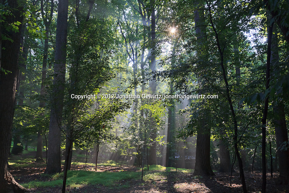 The morning sun shines through a lush wooded area in Maryland. WATERMARKS WILL NOT APPEAR ON PRINTS OR LICENSED IMAGES.