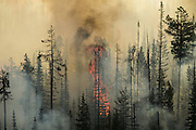 Dry forests burn in the Okanogan Complex fire near Omak as wildfires scorch central Washington August 20, 2015.<br /> <br /> Bettina Hansen / The Seattle Times