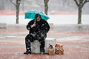 23 NOVEMBER 2020 - DES MOINES, IOWA: A person who picked up food waits for a ride home during a Thanksgiving food distribution at a park in Des Moines during a snowstorm. The food distribution was organized by Urban Dreams, a community empowerment NGO in central Des Moines, and the NAACP. The food was provided by Hy-Vee, a regional grocery store chain based in Des Moines. They had about 450 meals available. A spokesperson for Hy-Vee said the company was giving away more than 20,000 Thanksgiving meals this year. The Food Bank of Iowa said food insecurity in Des Moines has doubled since the start of the Coronavirus pandemic.   PHOTO BY JACK KURTZ