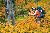 Backpacker photographing foliage displaying fall colors, Okanogan National Forest Washington USA
