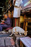 Inde, Delhi, quartier de Chawri Bazar, chat // India, Delhi, New Delhi, Chawri Bazar district, cat