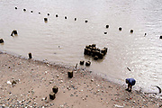 With the wooden piles of old warves and quays revealed in the low tidal waters of the Thames, a member of the public explores the rivers foreshore near Southwark Bridge, on 13th September 2021, in London, England. Excavating the Thames foreshore is only allowed by licensed Mudlarkers who scour the mud and shingle for historical artefacts dated from throughout Londons history as a port and ancient settlement.