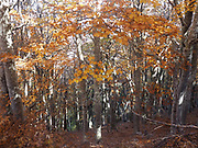 Autumn colours at Pindus Mountain range, Macedonia, Greece
