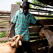 The Stars Foundation visiting Action in the Community Environment (ACE) in Bungoma, Kenya...Patrick Muuangu with two of his goats.  The dairy goats are of a special breed which has a very high milk production capability and the goats, a male and female, have been donated to him by ACE to help him supply his family with enough milk to sell as well as feed his family of 9. The off-spring of the two goats are then donated to other designated recipients in the community to spread the benefit of the goats wider.