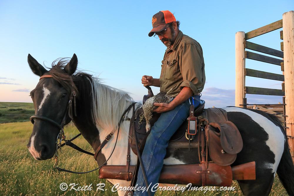 John Zeman, atop Buckwheat, admires a hard-won Montana sharptailed grouse.
